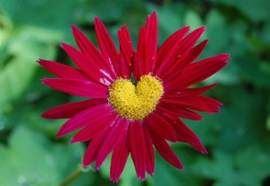 cropped-nature-heart-31.jpg